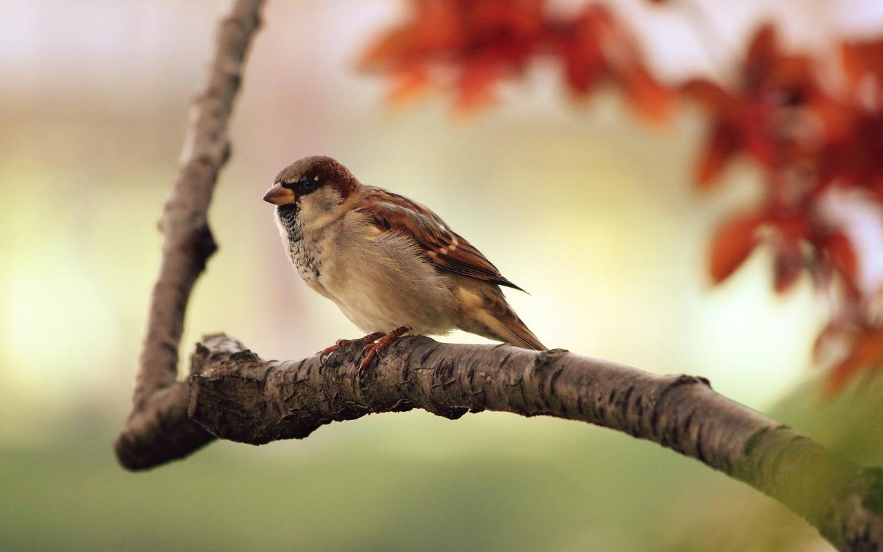 Birds of Bodnant Garden